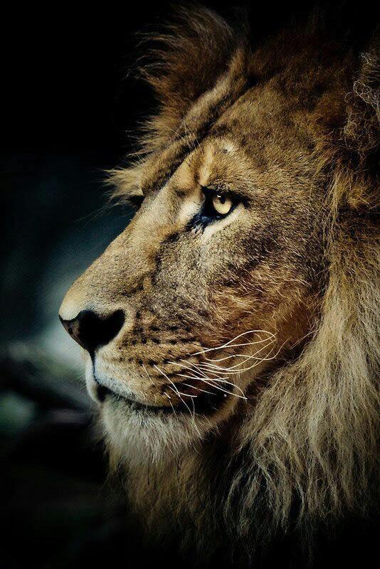 couragelion