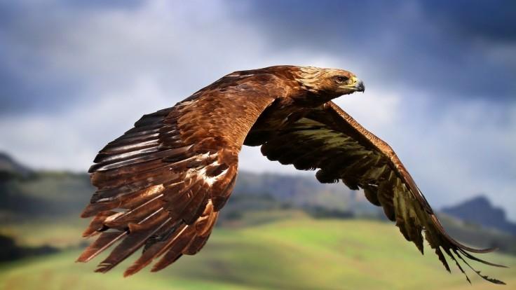 eaglesky