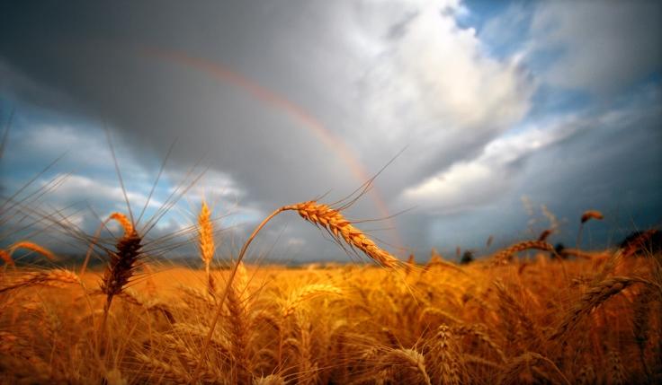harvestpromise