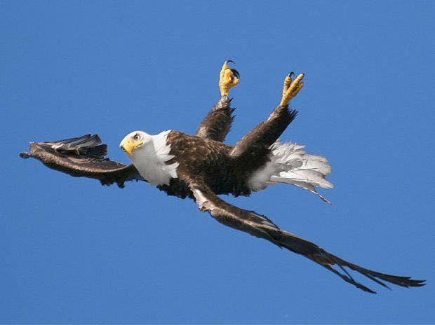 eaglebreakthrough