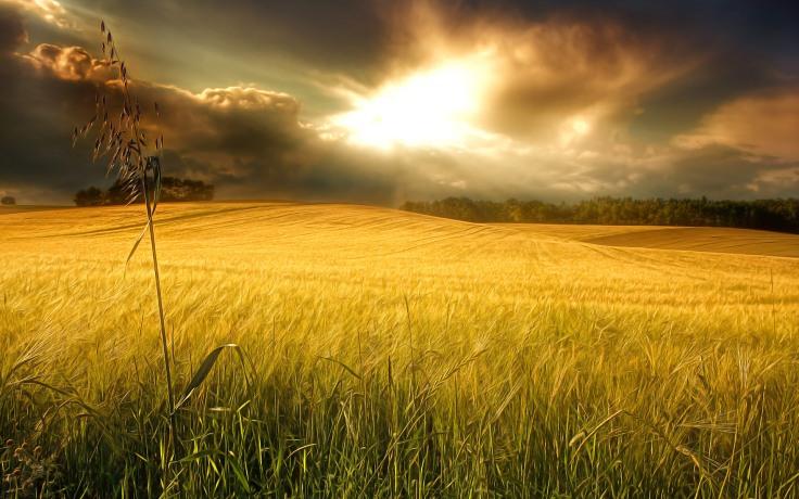 Sonnenlicht (Sunlight)